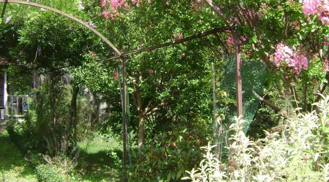 Suce sur Erdre: Two Gardens With Vine Covered Arbors