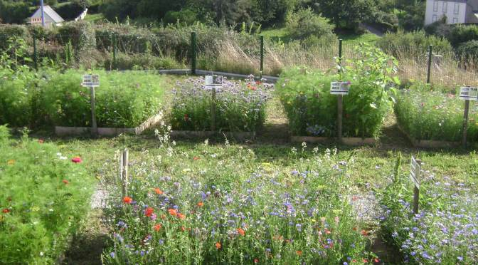 A Seaside Kitchen Garden with Raised Beds