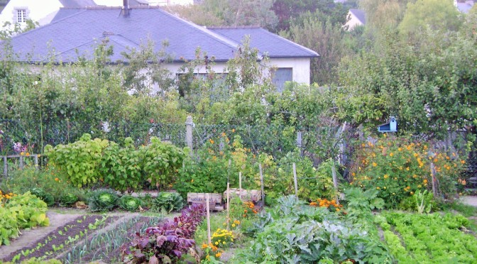 A Picture perfect kitchen garden in northern France