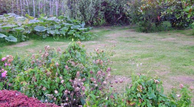 Brittany Garden and Pumpkin patch