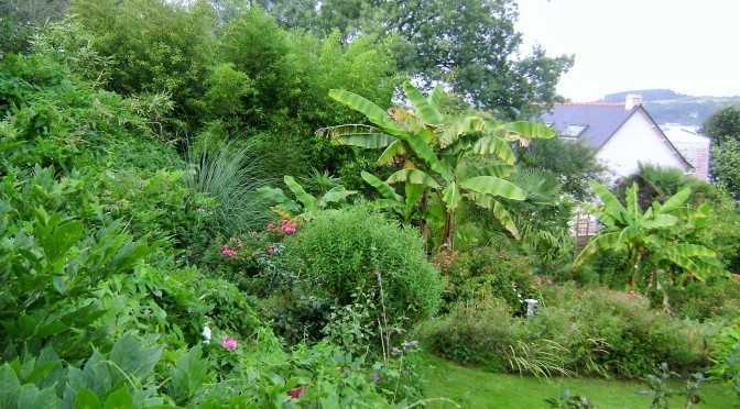 Brittany Terraced Garden with a Tropical Feel