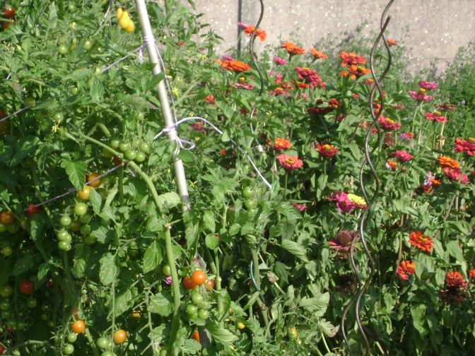 An Old Fashioned Flower and Vegetable Country Garden