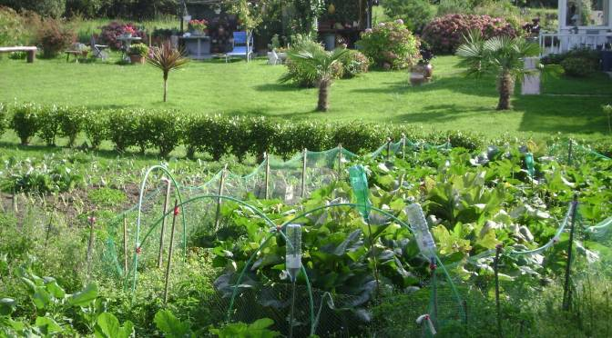 An orderly Kitchen garden in the country