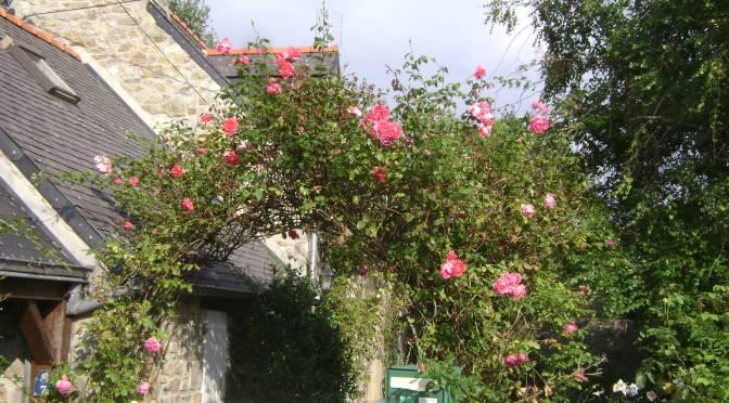 Fairytale Cottage Rose Garden in France