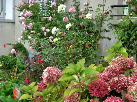A Small Rose Garden In Brittany Adds Curb Appeal Globetrotting