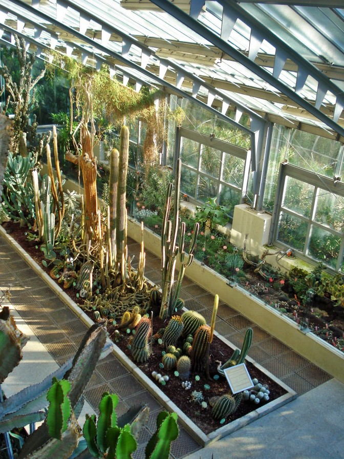 Madrid's Royal Botanical Gardens: The Succulents Greenhouse