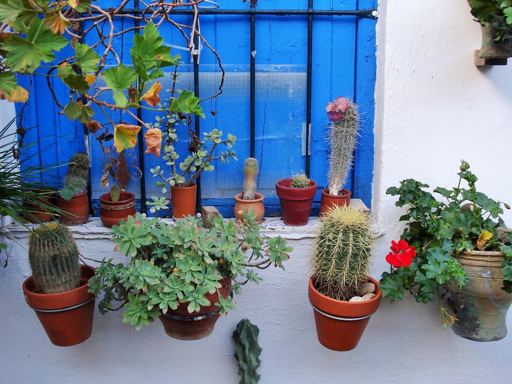Container Garden Ideas: Casa Del Patio In Cordoba: Vertical & Container Gardening