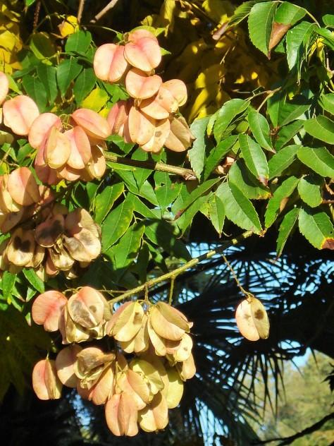 Jardin Amercican, Botanical Gardens, Seville, Spain
