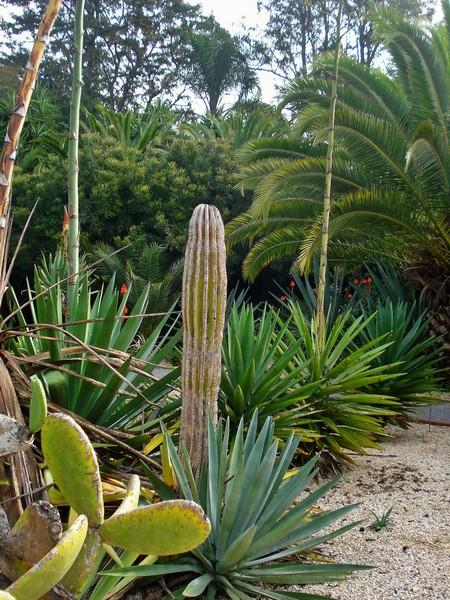 Morocco, Rabat, Jardins d'Essais, Botanical Gardens, Cacti and Succulents