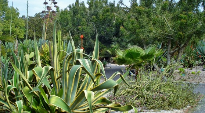 The Jardins d'Essais: Rabat's Historic Botanical Gardens, Part IV, Aquatic Garden and Succulents