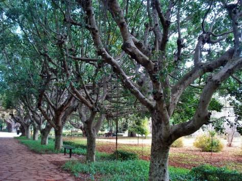 Morocco, Rabat, Jardins d'Essais, Botanical Gardens